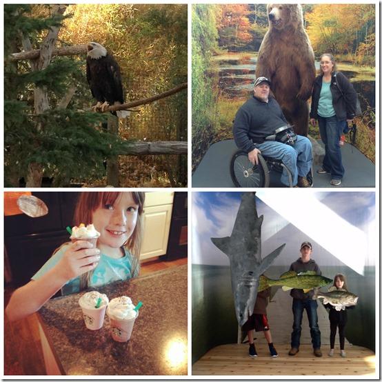 Zoo Scheels